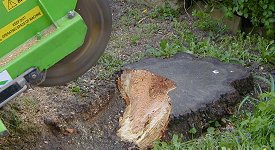 Powerful machine cuts the stump away.